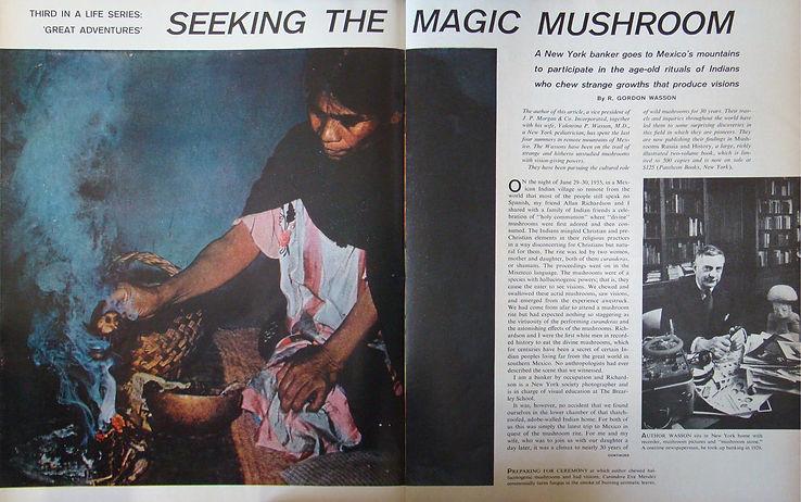 wasson life magic mushroom 1.jpeg