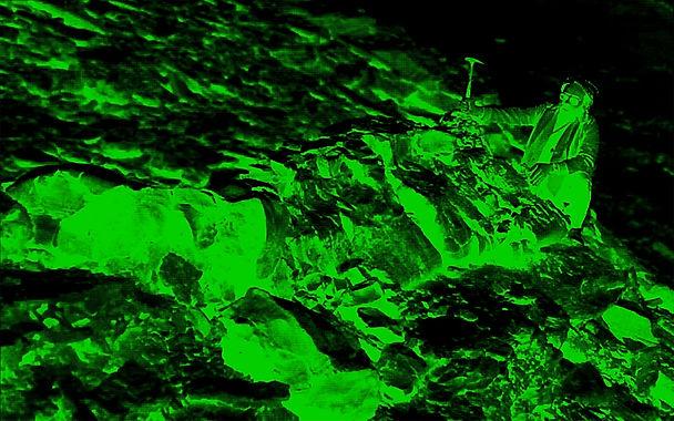 Prototaxites green.jpg