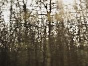 Le Chemin Tissé
