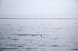 Traversée 2e jour dauphins