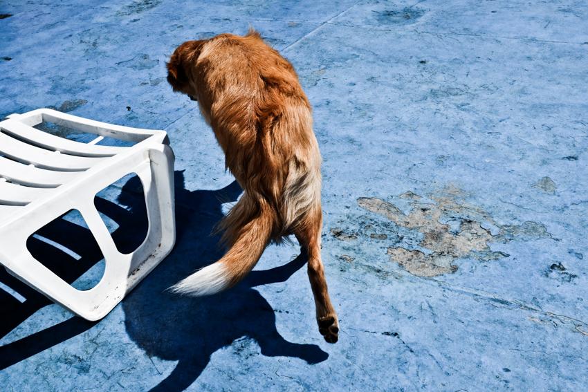 Traversée 2e jour le chien roux