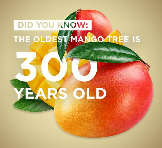 ePod Fruit Range - Mango