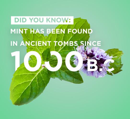 ePod Fruit Range - Mint