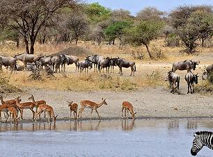 hotel_Kruger-National-Park-1478881478-27