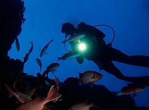 mergulho-noturno.jpg