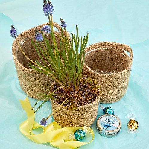 The Indoor Gardener Gift Box