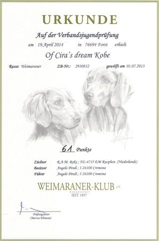 Of Cira's Dream Kobe ha superato la VJP