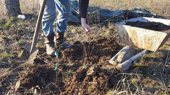 tree planting hungary 2.jfif