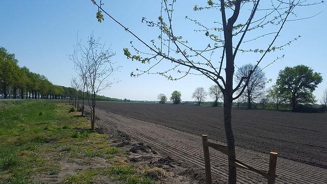 aanplant fruitbomen17.jpg