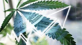 marijuana-business.jpg