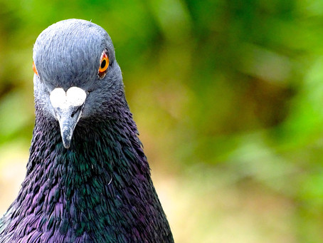 Feeling pigeonholed in your career?              Tell yourself a different story