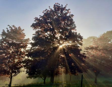 Soleil levant dans l'érable, Vouvant