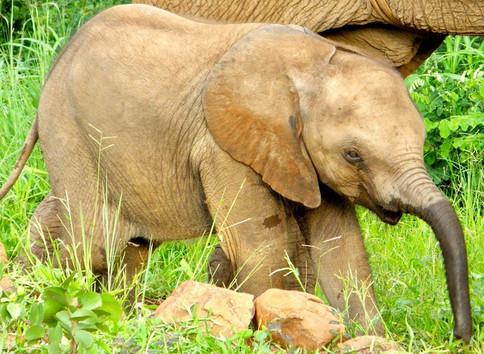Elephanteau, Zimbabwe