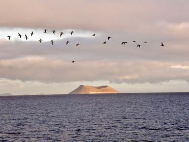 Volacan, Galapgos