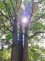 Forêt de Vouvant