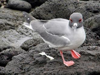 Oiseau, Galapagos