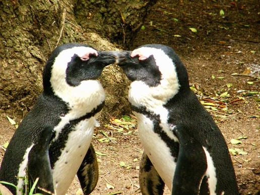 Pinguoins, Nouvelle-Zélande