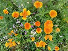 Fleurs champètres