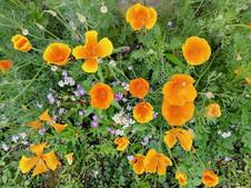 Fleurs champètres, Vouvant