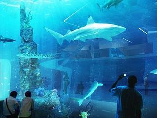 The ultimate basement aquarium