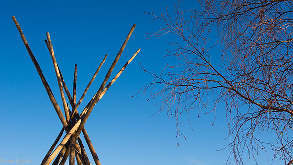 Tribal Approach