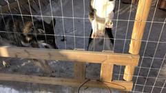 Dogs Farm
