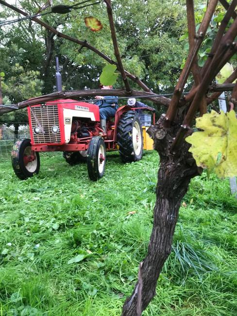 Mark's Vintage Tractor