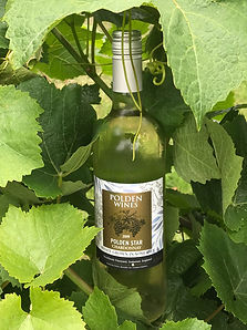 Polden Star White Wine.jpg