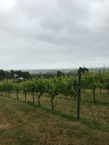 Vines with a view!
