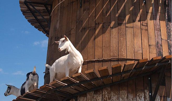 LaClare Goat Silo2.jpg
