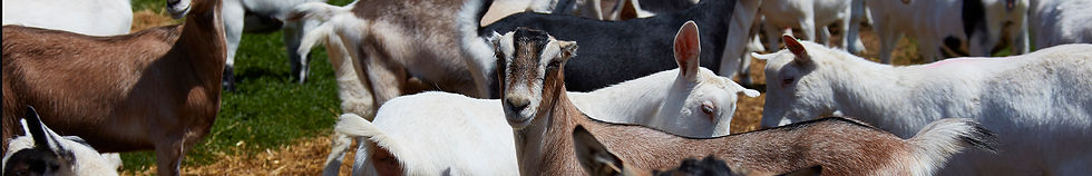GoatMilkFactsheader.jpg