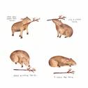 Capybara comic