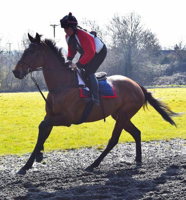 Training at home on the circular gallop