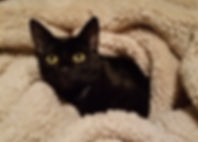 Chandel's Cat Edgar