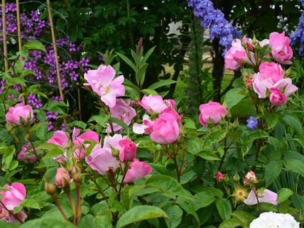 Flowering in July