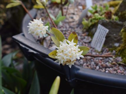 Flowering in April