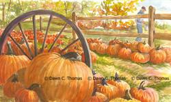 Pumpkin Time at Faulkner's Ranch