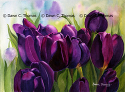 Tulips Violette