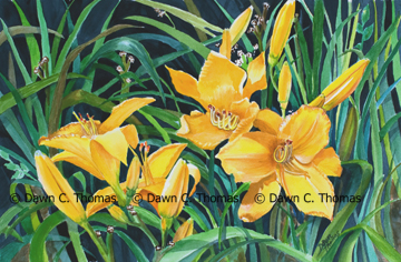 Yellow Day Lillies