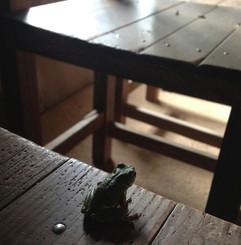 家の蛙5.jpg