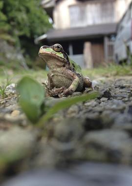 外の蛙2.jpg