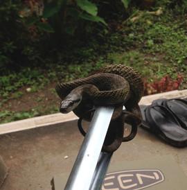 下駄箱に住んでいた蛇との別れ.jpg