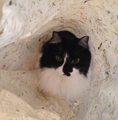 和紙好き猫.jpg