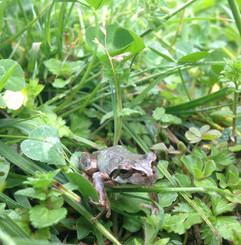 外の蛙.jpg
