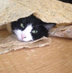 和紙好き猫2.jpg