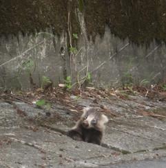 近所の穴熊.jpg