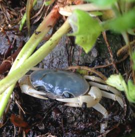 外の蟹.jpg