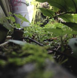 裏の蛙3.jpg