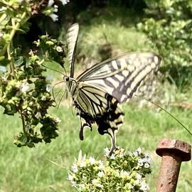 蝶々.jpg