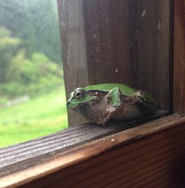 家の蛙2.jpg